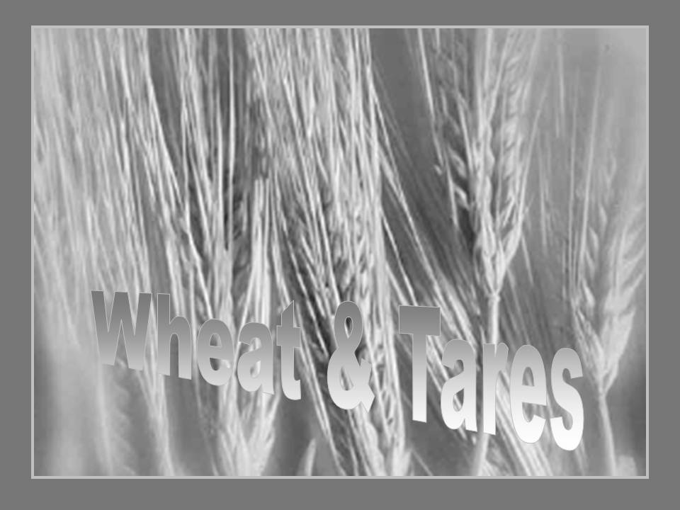 Parable of the Wheat and the Tares Sermon